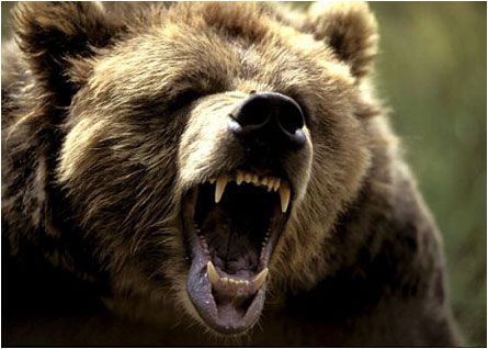 A Notably Bearish Trading Session
