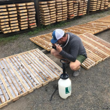 Westhaven Hits Broad High-Grade Gold Intersection, Multiple Bonanza-Grade Gold Intersections At Shovelnose